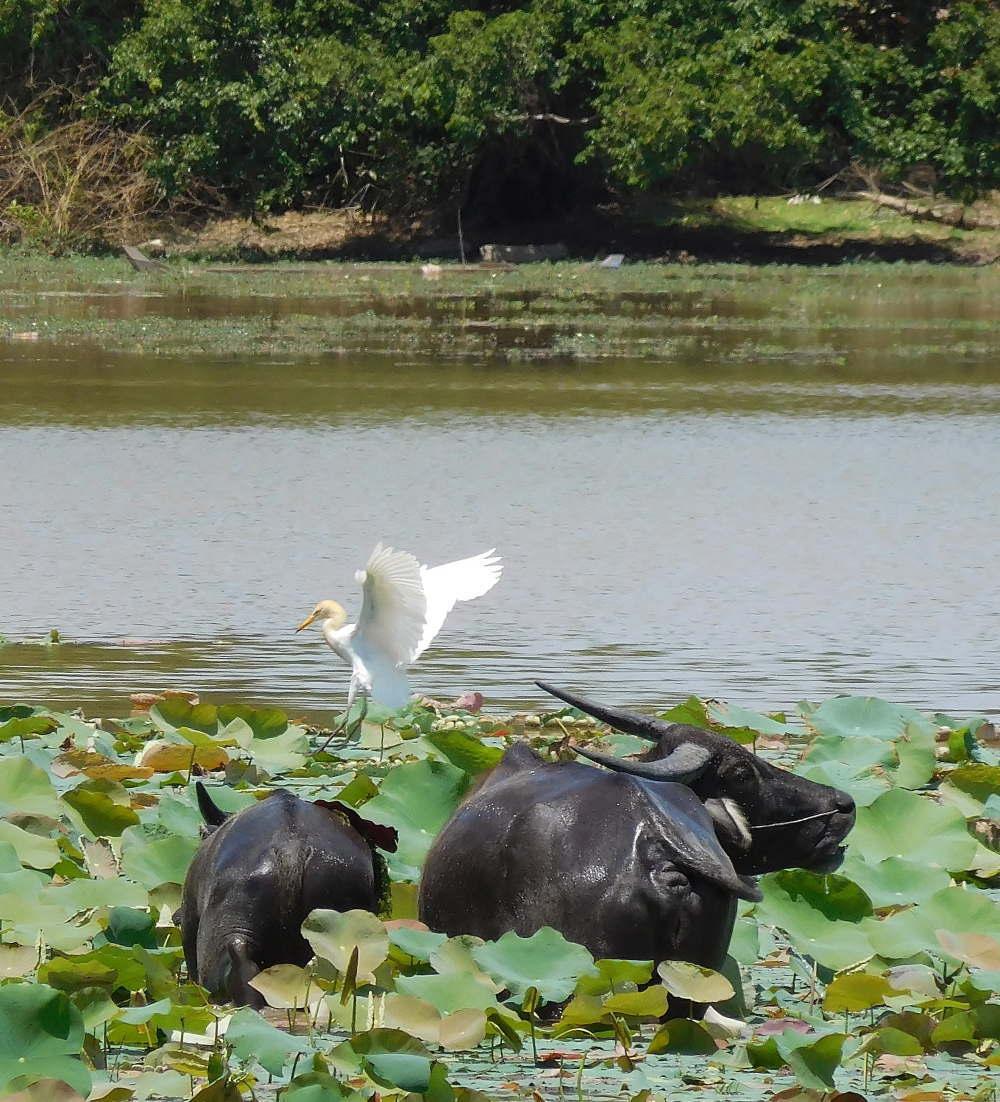 バコン遺跡 アンシエント貯水池
